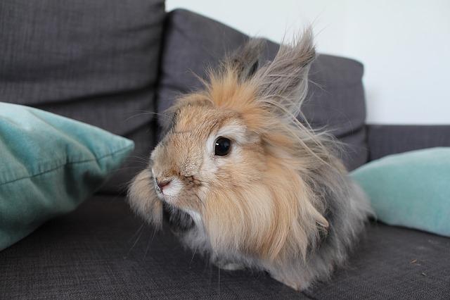 chlupatý králíček