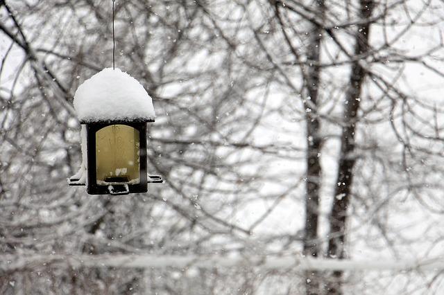sníh na krmítku